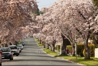 Victoria Street Trees Image